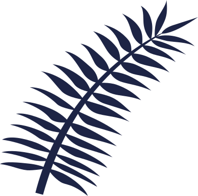 style palm leaf line images in PNG and SVG | Icons8 Illustrations