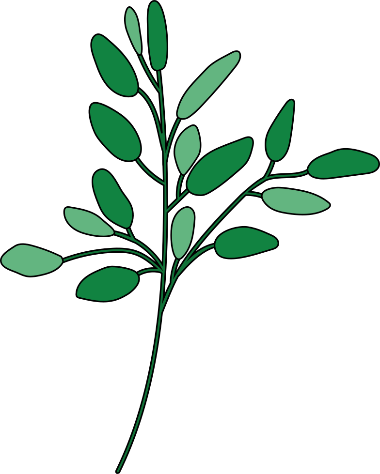 style olive branch Vector images in PNG and SVG | Icons8 Illustrations