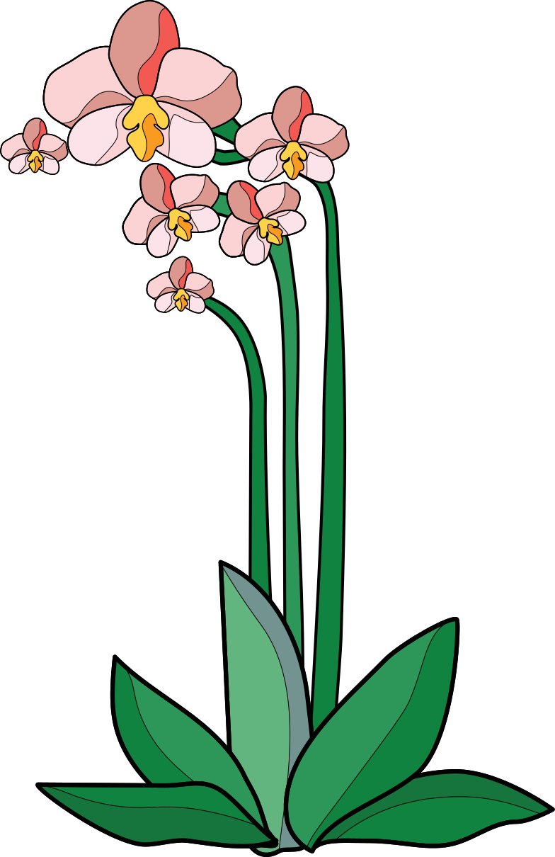 orchid Clipart illustration in PNG, SVG