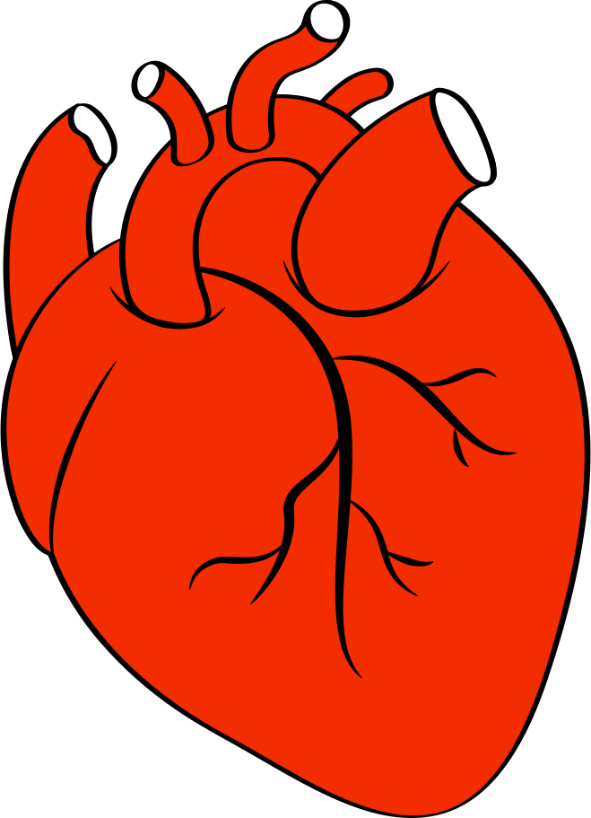 heart of man Clipart illustration in PNG, SVG