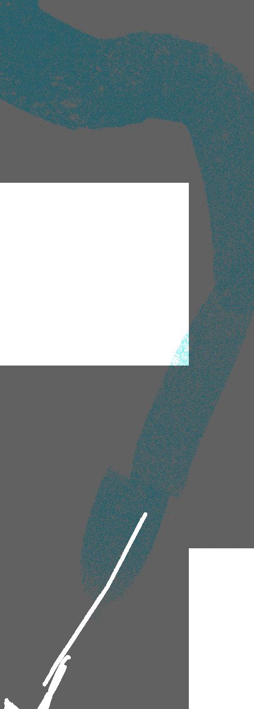 leash Clipart illustration in PNG, SVG