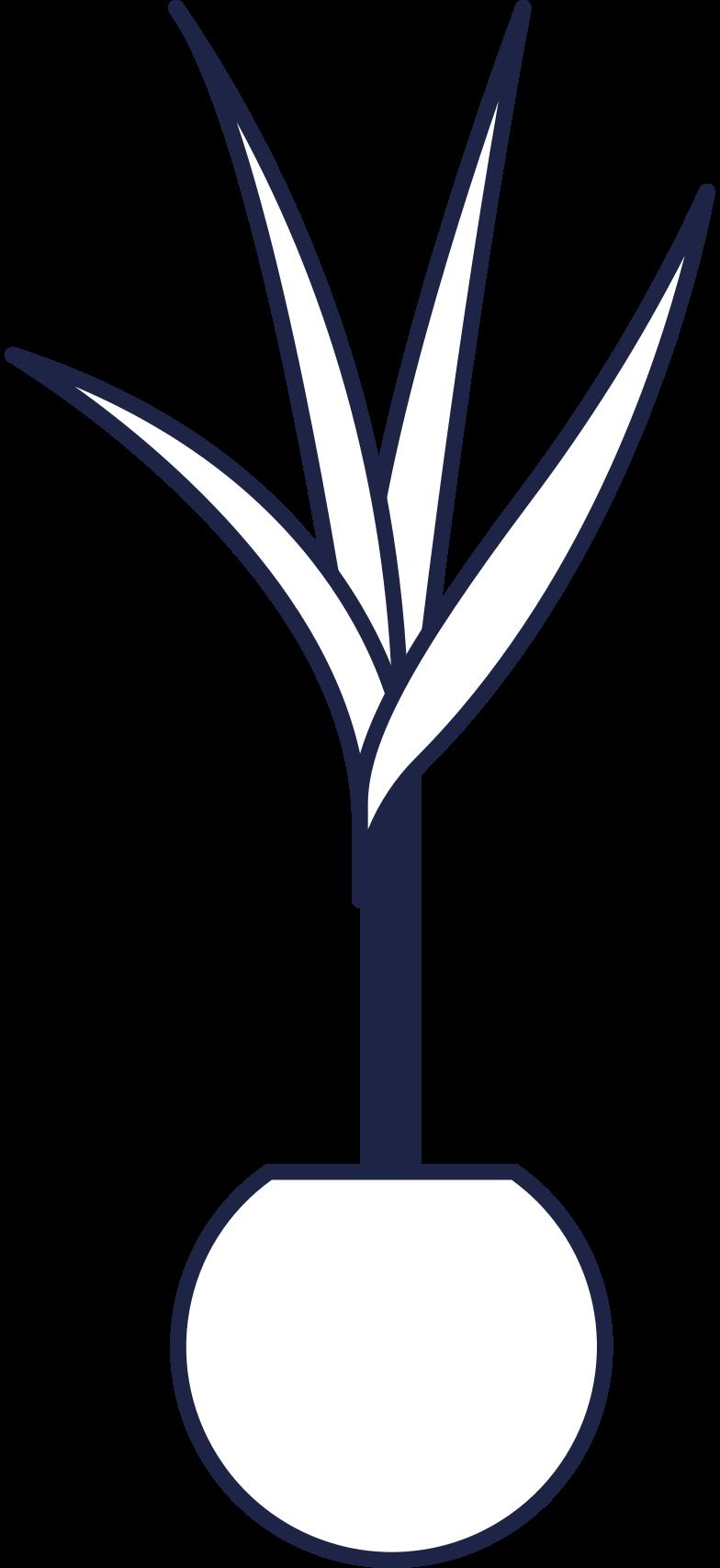 plant interior line Clipart illustration in PNG, SVG