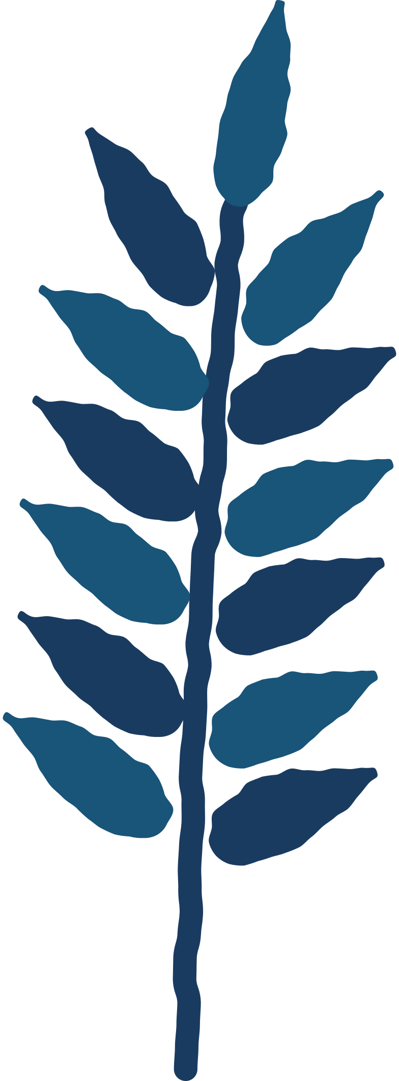 style rowan leaf Vector images in PNG and SVG | Icons8 Illustrations