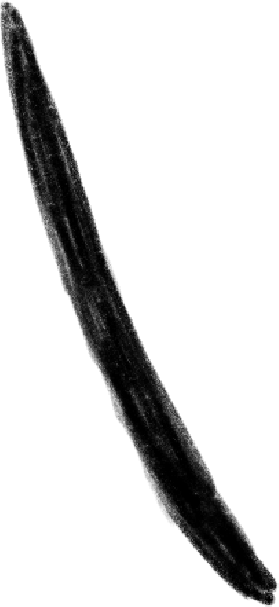 Immagine Vettoriale linea di movimento in PNG e SVG in stile  | Illustrazioni Icons8