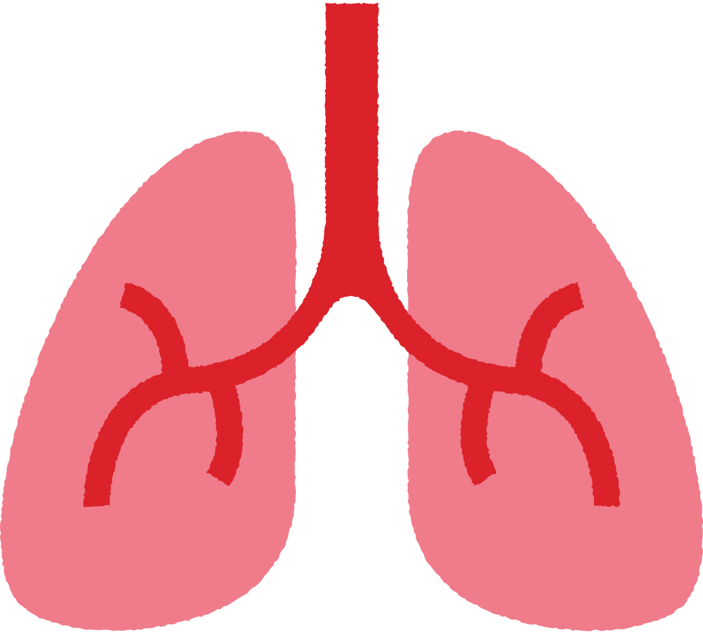 lungs Clipart illustration in PNG, SVG