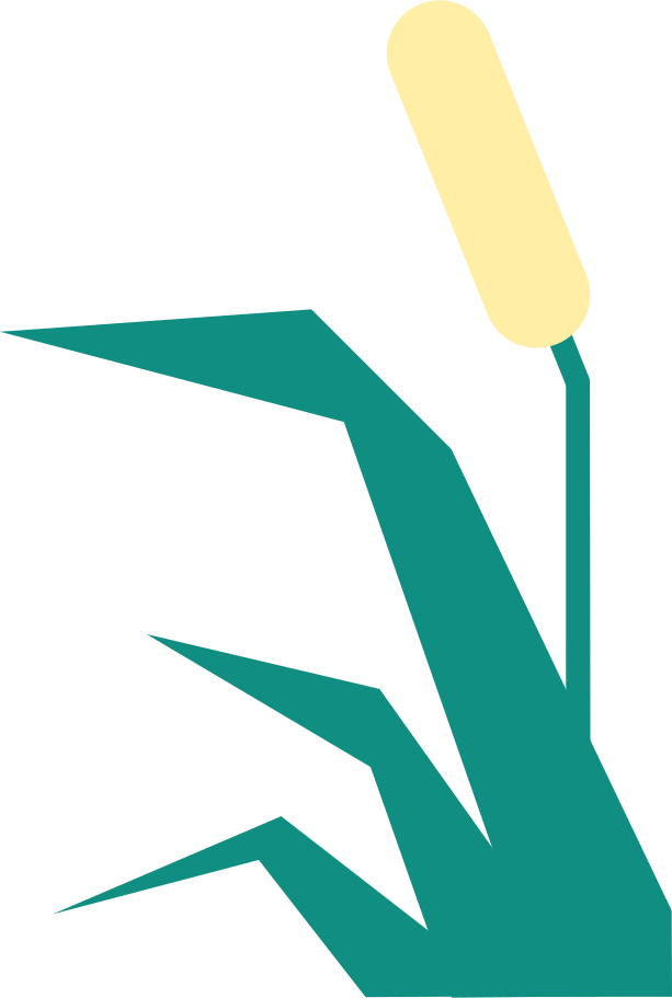 reed Clipart illustration in PNG, SVG