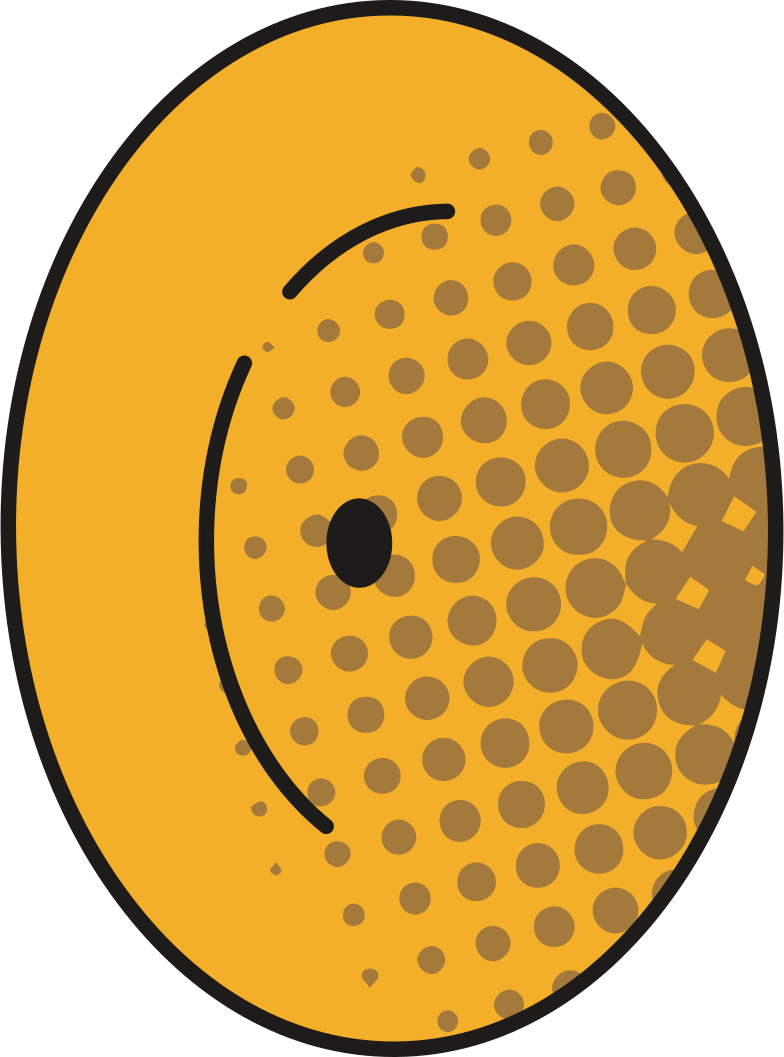 style cymbals Vector images in PNG and SVG | Icons8 Illustrations