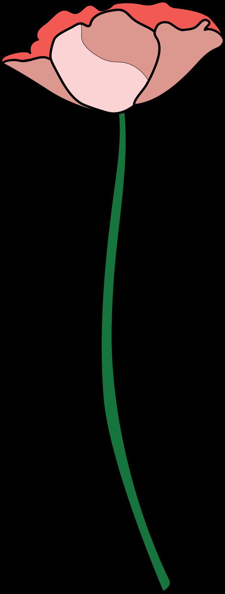 poppy flower Clipart illustration in PNG, SVG