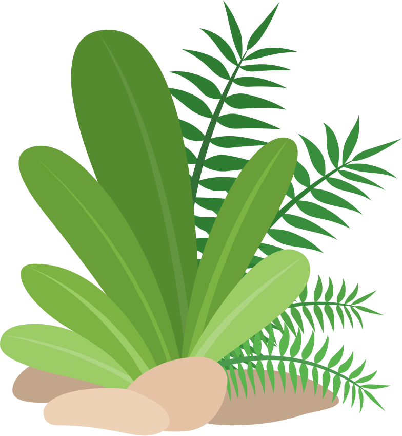 tropical plants Clipart illustration in PNG, SVG