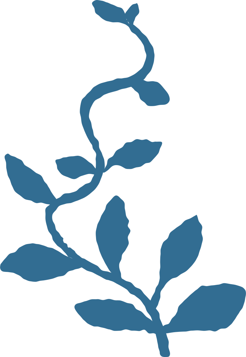 branch with leaves decoration Clipart illustration in PNG, SVG