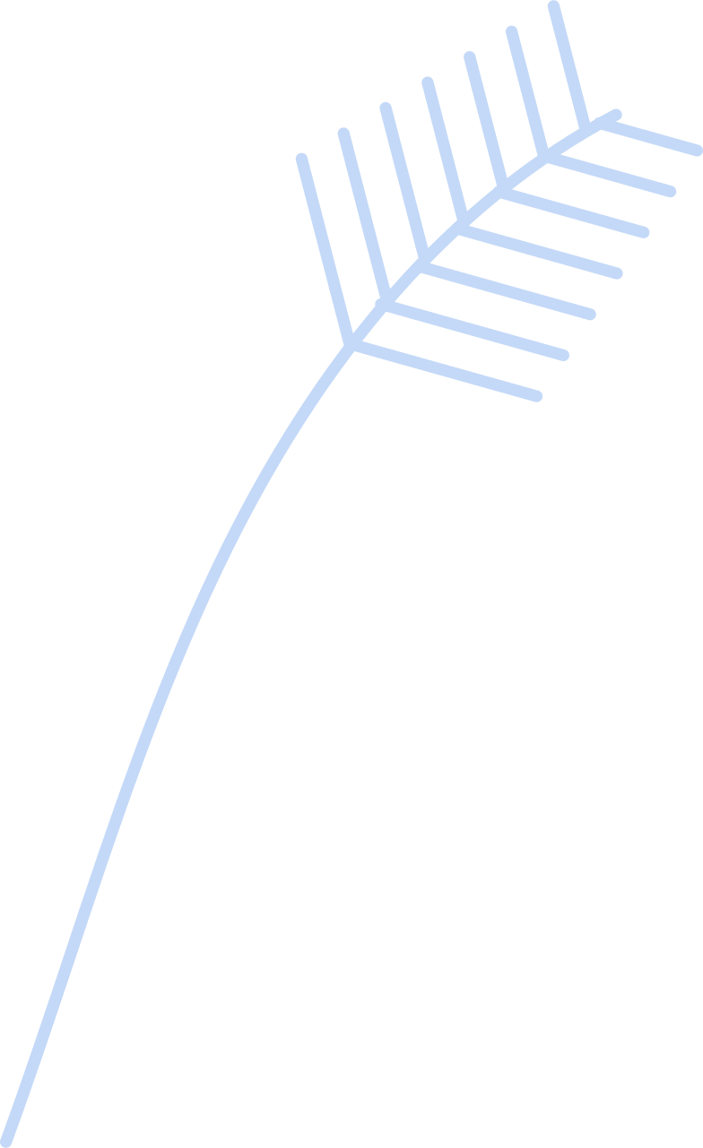 spruce Clipart illustration in PNG, SVG