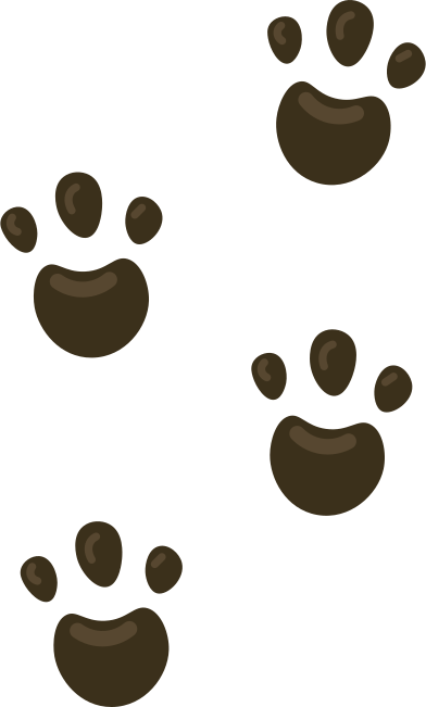 style footprints images in PNG and SVG   Icons8 Illustrations
