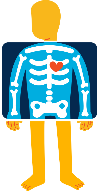style x-ray images in PNG and SVG | Icons8 Illustrations