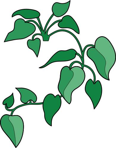 style home plant images in PNG and SVG   Icons8 Illustrations