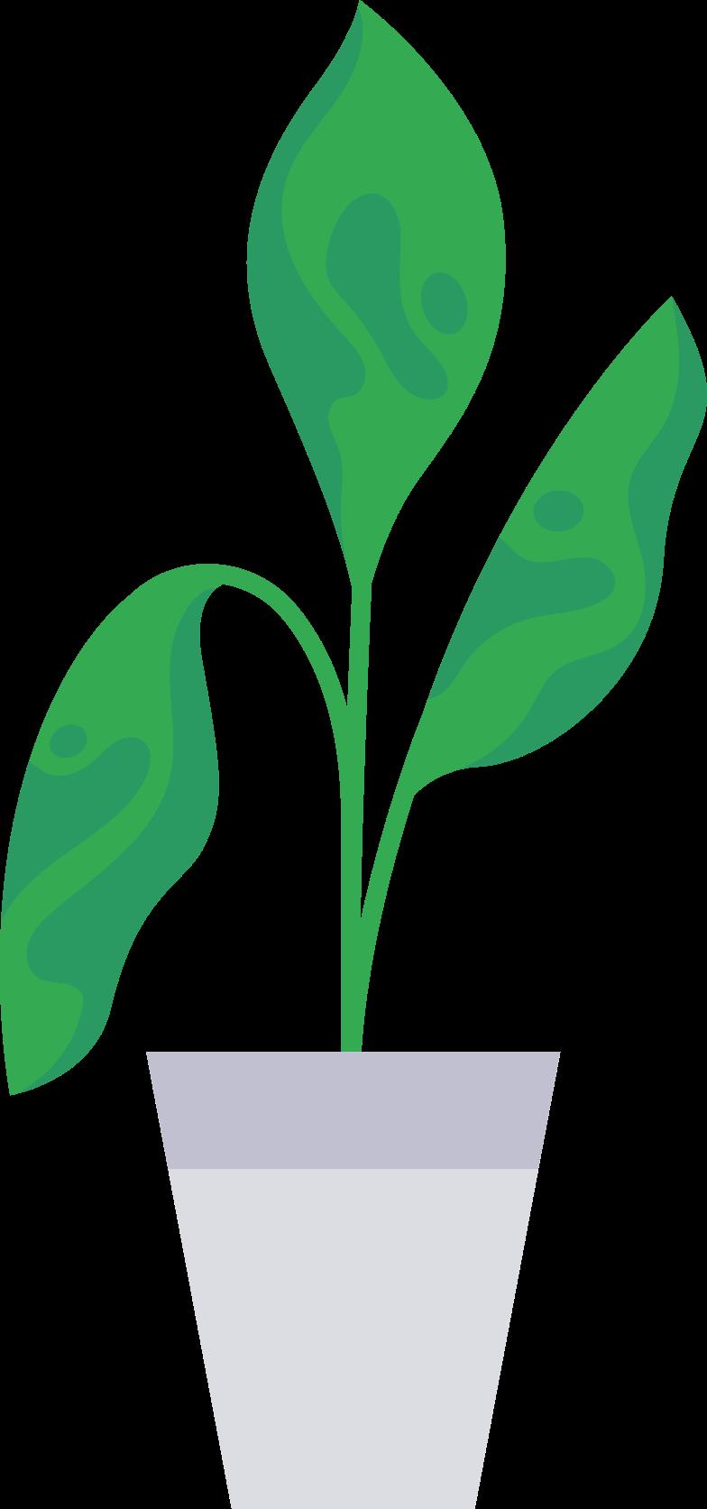 Клипарт plant в PNG и SVG