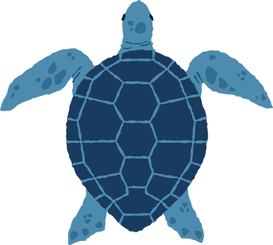 style sea turtle top images in PNG and SVG   Icons8 Illustrations