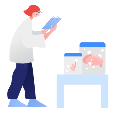 style Lab-grown organs images in PNG and SVG   Icons8 Illustrations
