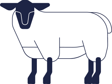 style sheep images in PNG and SVG | Icons8 Illustrations