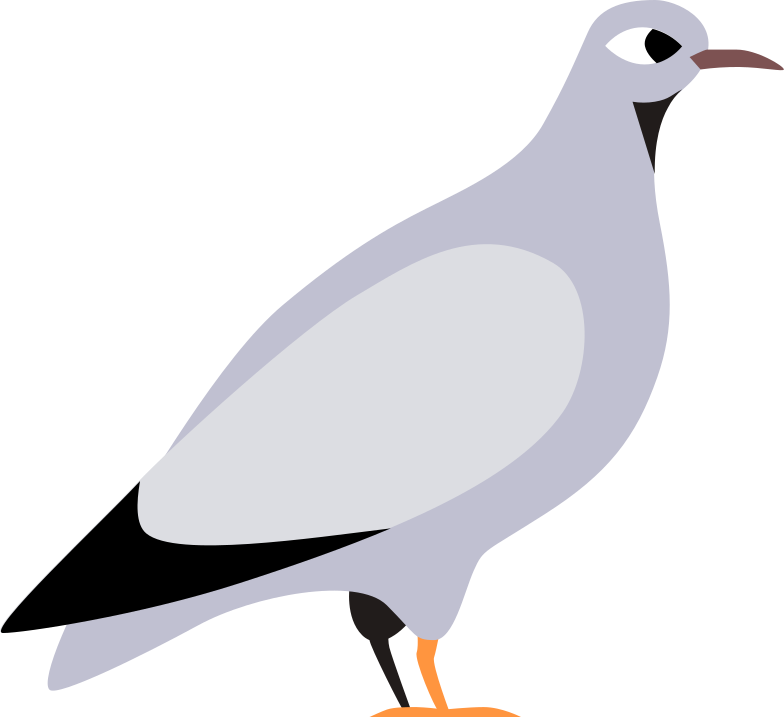 pigeon Clipart illustration in PNG, SVG